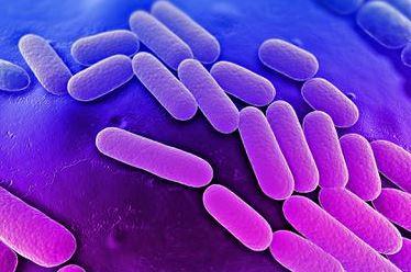 Hospital superbug (Juune 2015)