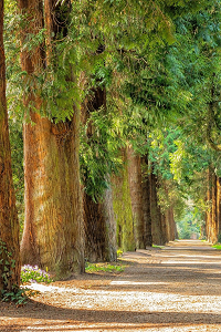Trees with green foliage leaves and pathway